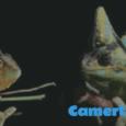 vidéo au format GIF